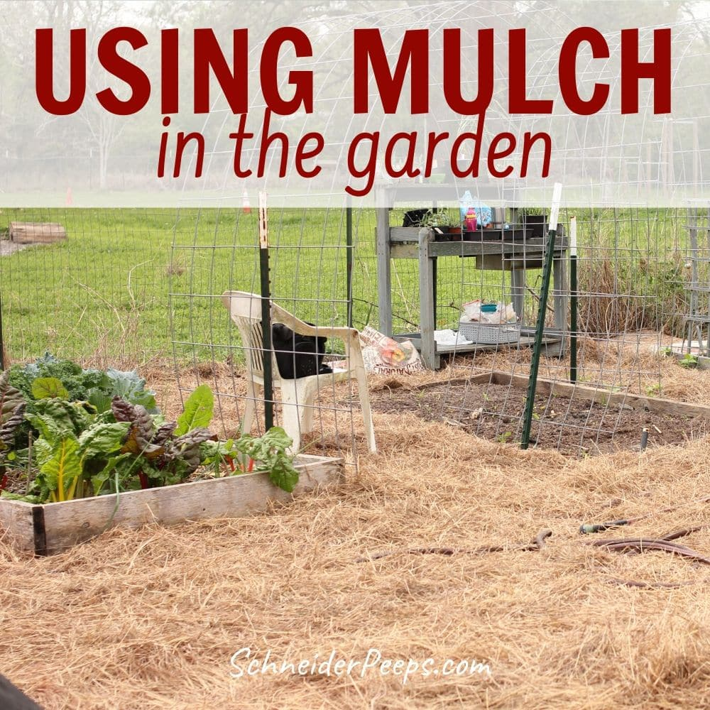 image of vegetable garden with hay mulch