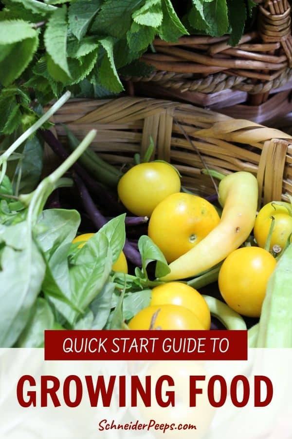 image of a basket with homegrown yellow cherry tomatoes, peppers, okra and basil in it