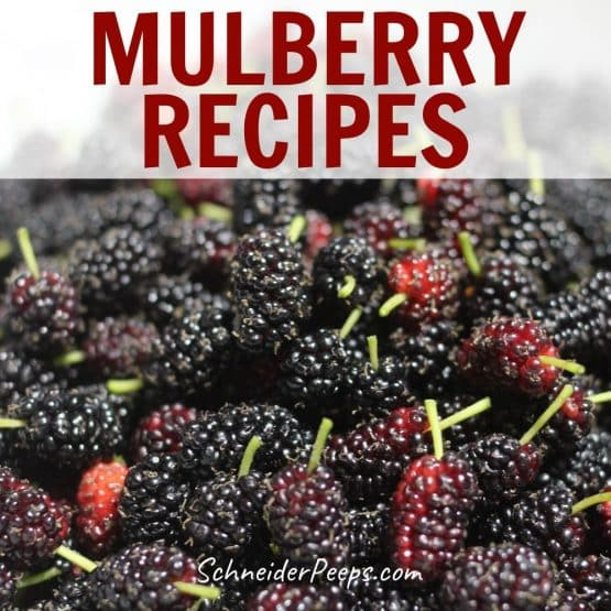 image of a lot of ripe mulberries in a white bowl
