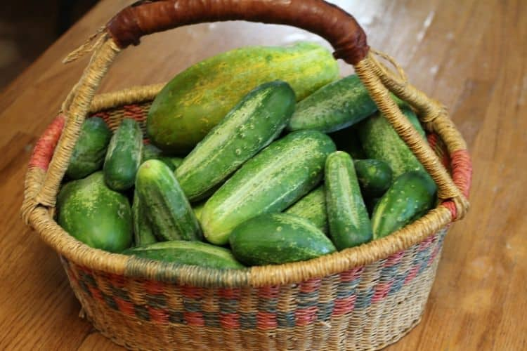 wicker basket with leather handle filled with cucumbers