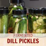 canning jars with cucumbers in them for fermenting