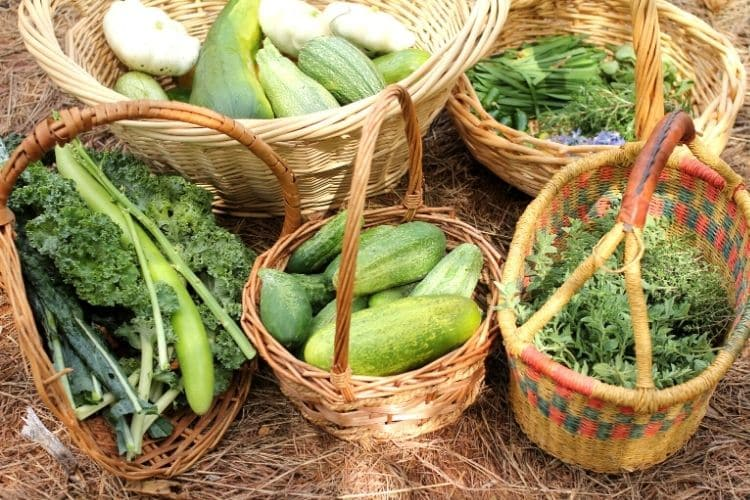 baskets of garden fresh vegetables and herbs