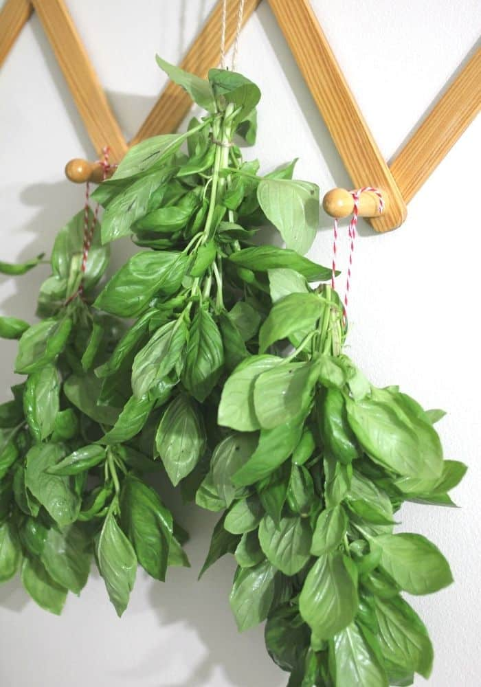 basil hanging to air dry