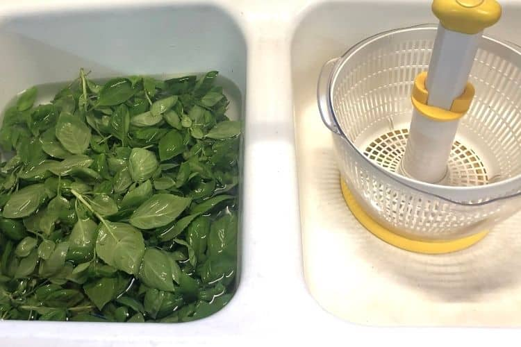 two tub sink with basil in cold water in one side and salad spinner in the other side