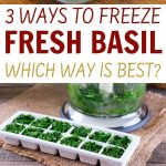 collage of fresh basil being frozen in ice cube trays, on cookie sheet, and in zip lock bag